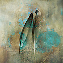 Two feathers. Photo based illustration.