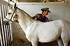 Cuba Trip.Scanned 11/21/2003.Erik Kellar/Staff..PRIZED RIDE.Working on a ranch near the town of Soroa in Pinar del Rio, a vaquero, or cowboy, grooms an Arabian owned by Commandante Guillermo GarcÌa Frias. While the powerful man who saved Fidel CastroÕs life during the revolution has a collection of prized horses, lately he has turned his interest toward increasing the nationÕs herd of beef cattle, some of which are destined to come from Florida. Erik Kellar/Naples Daily News