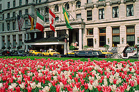 Plaza Hotel, and Tulips, New York City, NY designed by Henry J Hardenbergh, Grand Army Plaza, Fifth Ave at 59th St.