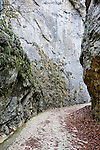 The gorge in Piatra Craiului national park, used as a location in the film Cold Mountain, Transylvania, Romania