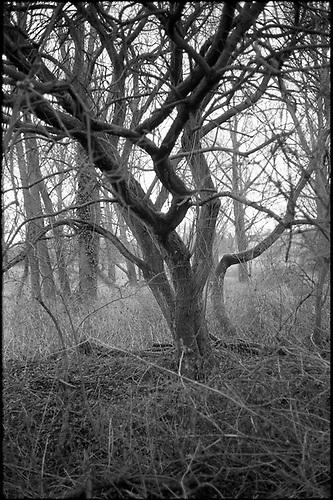 Edition 2/10 – Thornham Walks, Suffolk by Paul Cooklin