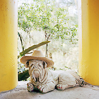 A statue of a Shar Pei at the Edward James Surrealist Gardens at Las Pozas, Xilitla, Mexico