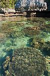Karst mushroom rock and table corals in clear, shallow waters, Suranggan, Triton Bay, Papua