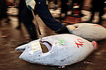 """An employee at the world's biggest fish market in Tsukiji, Tokyo drags off large tuna during auctioning at the market. More than 2,300 tons of fish -- about one-third of the total consumed in Japan -- passes through Tsukiji each day and the market offers more than 450 varieties of marine products. The market, which dates back almost 75 years, is slated to move to a high-tech site on a man-made island in Toyosu, which is well-documented as being contaminated with benizine. Not that Tsukiji is much better off -- many buildings in the aging site are stuffed with asbestos. """"Choose your poison,"""" says one Tsukiji official. The new site, which the government plans to be readied by 2012, will be significantly larger, with more room for off-loading and for sellers to display their goods. The current location, says one official, is too cramped and collisions between motorised carts and pedestrians means accidents occur almost daily. Meanwhile, with fish sales down, it is becoming more difficult to justify Tsukiji's prime location and property developers are keeping a close watch on Tsukiji land, which is just a few blocks from the ritzy Ginza district of Tokyo, where per-meter land prices are among the highest in the world...The move to the new Toyosu location, meanwhile, has been at the center of heated debate -- clean-up operations alone are estimated to cost ¬?67 billion (around US$660 million), with a further ¬?450 billion to build a new marketplace. Big wholesalers favour the move, but the 1,600-plus merchants mostly are against it. Yoshiharu Kikuraku, a Tsukiji storeowner who began working at the market 60 years ago, expresses bewilderment at the plans, saying that the name Tsukiji itself has become synonymous with the world's best and most eclectic selection of fish. """"This place has a long tradition. Why break it and start from scratch all over again?"""" he says."""
