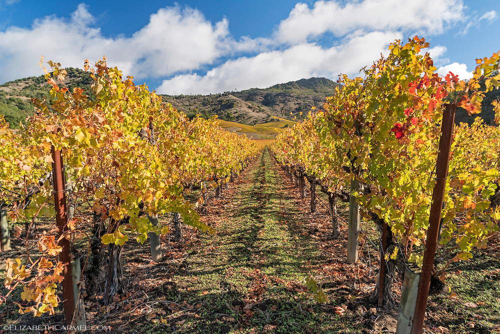 Autumn Sun, Napa Valley