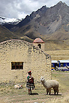 South America, Peru, La Raya. Woman with llama at La Raya, the highest point of elevation for the Andean Explorer train journey from Cusco to Puno.