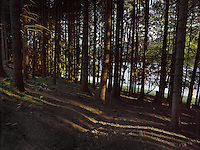 FOREST_LOCATION_90012