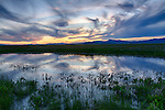 Idaho, South Central, Fairfield. Sunset over the camas flowers of the Centennial Marsh in spring.