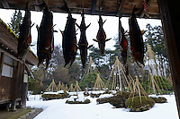 A preserved samurai residence with salt salmon hanging from the eaves, Murakami-city, Niigata Prefecture, Japan, February 4, 2013. The snowy city in Northern Japan is famous for hot-springs, tea and salt salmon.