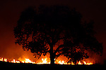 A wildfire burns under a giant Oak tree in Simi Valley