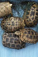 Asie/Chine/Jiangsu/Env Nankin&nbsp;: March&eacute; libre de la rue Shan-Xi - D&eacute;tail des tortues de terre pour cuisiner des soupes<br /> PHOTO D'ARCHIVES // ARCHIVAL IMAGES<br /> CHINE 1990