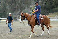 Santa Monica Police Department Mounted Division Officer Phillbo Rubish gives directions to SMPD Chief Timothy Jackman while he gallops on Mr.Cool, a 20 year old Quarter Horse, during a private equitation lesson at Will Rogers State Park on Monday, June 11, 2007.  Mr. cool has been working for SMPD since he was 13 years old. He is the senior horse in the department and is scheduled to retire as soon as they can find his replacement.