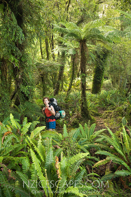 Female tramper in native podocarp forest with tree ferns near Jackson Bay, South Westland, West Coast, UNESCO World Heritage Area, South Island, New Zealand, NZ