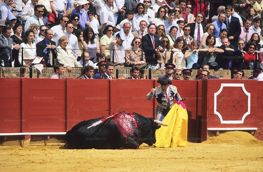 "Finishing off the bull. Tercio de Muerte..Bullfighting in Sevilla's famous bullring ""La Real Maestranza"" is a significant part of the Feria de Abril..The Feria de abril de Sevilla, ""Seville April Fair"" dates back to 1847. During the 1920s, the feria reached its peak and became the spectacle that it is today. It is held in the Andalusian capital of Seville in Spain. The fair generally begins two weeks after the Semana Santa, Easter Holy Week. The fair officially begins at midnight on Monday, and runs six days, ending on the following Sunday. Each day the fiesta begins with the parade of carriages and riders, at midday, carrying Seville's citizens to the bullring, La Real Maestranza. Seville. Andalusia. Spain...Blood sport ending in the killing of a bull in front of thousands of spectators. An entertainment and tradition derived from the ancient gladiatorial spectacles of Roman times. This activity is loved and defended by 'affecionados' who see the artistry and traditions whilst it is detested by animal rights activists, environmentalist and ecologists for its cruelty to animals"