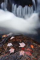 Colorful fallen autumn leaves resting on rock in Duck Brook, Mount Desert Island, Acadia National Park, Maine, USA