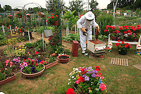 Beehive in a community garden