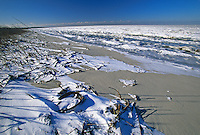 Ice Filled Bay, Kimble's Beach with horseshoe crab shell, Delaware Bay, New Jersey