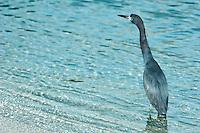Seabird on the beach at Maho Bay St. John.Virgin Islands National Park