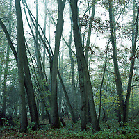 Woodland Mist,  Suffolk | Colour