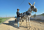 A man adjusts his donkey cart on a farm road in Zeitun, Gaza. The border with Israeli is just 600 meters away, and military activity in the area has precluded constructing the infrastructure necessary for farming. In the wake of the truce that ended the 2014 war between Hamas and the Israeli military, Diakonie Katastrophenhilfe, a member of the ACT Alliance, built this road so that farmers could have access to the area. ACT Alliance members are supporting health care, vocational training, rehabilitation of housing and water systems, psycho-social care, and other humanitarian actions throughout the besieged Palestinian territory.