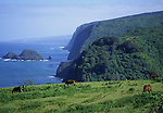 horses grazing at Pololu Valley lookout