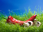 Long Sweet Pepper Italian Red Marconi and vremini mushrooms on green grass under blue sky artistic food still life