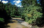 River through tropical rainforest - Danum Valley, Sabah, jungle, green, blue sky.Malaysia....