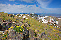 From the summit of Byers Peak at just under 13,000 feet, several groups of golden wildflowers added color to the windswept rocks of this Fraser, Colorado, icon. The hike up is 3,000+ vertical feet and a good grunt the last 1,000 feet. Once on top, the views of the surrounding Rocky Mountain landscape are incredible.