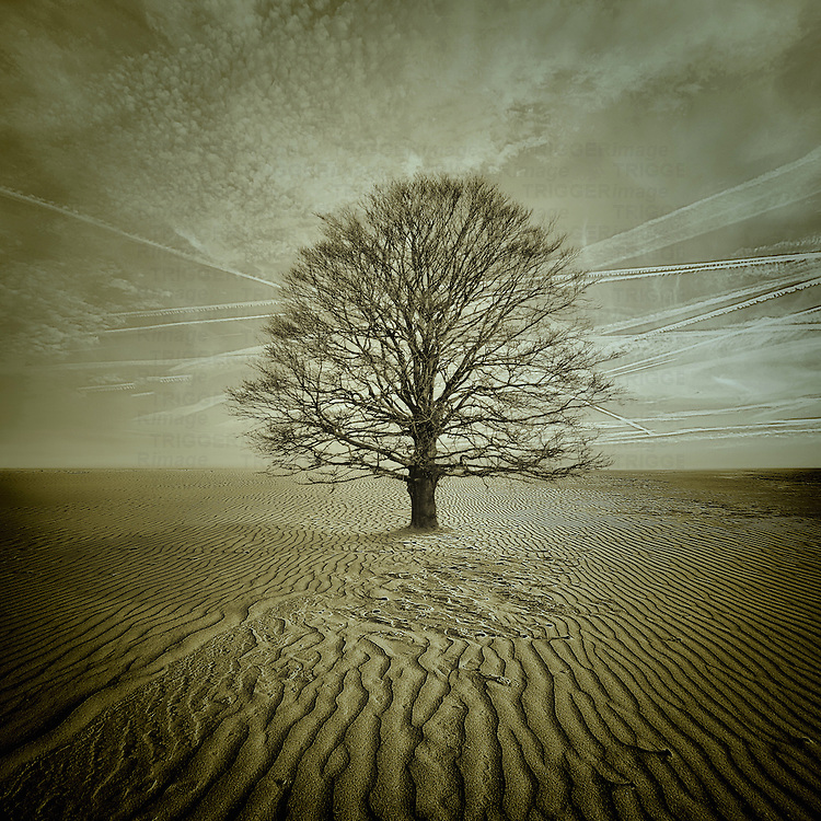 Conceptual image of a rural agricultural scene with a bare winter tree in a dried landscape