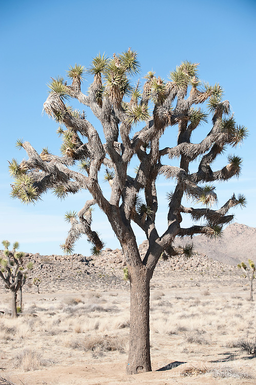 joshua tree mature personals Personals weather delish quotes white pages games  top 10 hiking destinations  joshua tree joshua tree national.