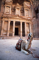 Camel sitting at the entrance to the iconic ruins at Petra, Jordan