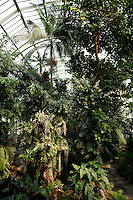 Tropical Rainforest Glasshouse (formerly Le Jardin d'Hiver or Winter Gardens), 1936, René Berger, Jardin des Plantes, Museum National d'Histoire Naturelle, Paris, France. General view of the luxuriant tropical foliage, beneath the glass and metal roof structure of the Art Deco style glasshouse.