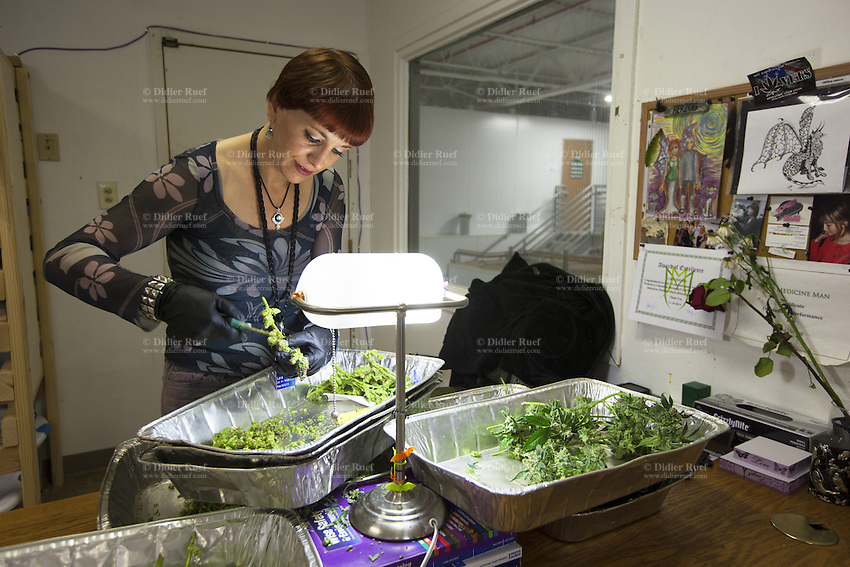 USA. Colorado state. Denver. After pot is harvested, Lala Herzog cuts marijuana leaves and flowers from the plants in the trim room at Medicine Man. Medicine Man began nearly six years ago as a small medical marijuana operation and has since grown to be the largest single marijuana dispensary, both recreational and medical, in the state of Colorado and has aspirations of becoming a national brand if pot legalization continues its march. Cannabis, commonly known as marijuana, is a preparation of the Cannabis plant intended for use as a psychoactive drug and as medicine. Pharmacologically, the principal psychoactive constituent of cannabis is tetrahydrocannabinol (THC); it is one of 483 known compounds in the plant, including at least 84 other cannabinoids, such as cannabidiol (CBD), cannabinol (CBN), tetrahydrocannabivarin (THCV), and cannabigerol (CBG). 18.12.2014 © 2014 Didier Ruef