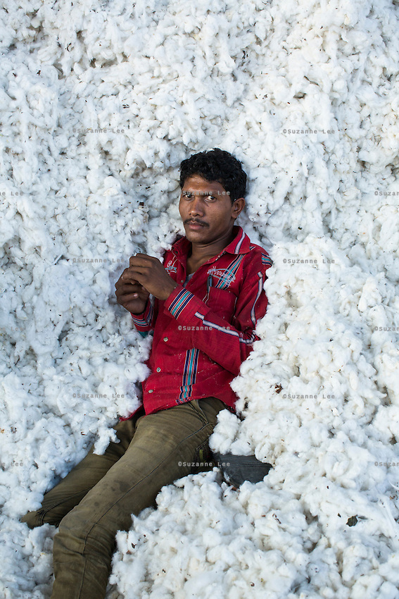 Labourer Dharmendra Meda, 20, takes a rest in the mountain of raw Fairtrade cotton after unloading it from a truck at a ginning factory that is contracted by Pratibha in Karhi, Khargone, Madhya Pradesh, India on 12 November 2014. Photo by Suzanne Lee for Fairtrade