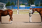 Show Judge Gena Loper looks over a series of Quarter Horse geldings at the North Idaho Fair and Rodeo Open Horse Show at the Kootenai County Fairgrounds in Coeur d'Alene on Friday.