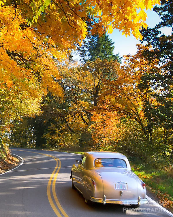 Fall colors in the maple trees makes for pleasant drive on curvy road with an old classic car
