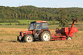 Thrashing oats in field  with pull-type combine
