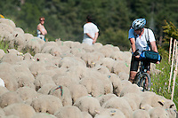 Ancelle, Hautes Alpes, France, July 2013. Shepherds driving the sheep over the Col de Moissiere on their way to the summer pastures in the mountains. Ancelle is a good base to explore the Ecrin National Park  with its close proximity to the Champsaur and Valgaudemar. The Hautes Alpes region is made of valleys, lakes, canyons and mountains going from the northern Alps to the Provence and ranges from 500m to 4302m  in altitude. Endowed with an exceptional beauty the Hautes Alpes has managed to keep clear of industry and large crowds. The atmosphere has stayed casual and convivial. There is an alpine feeling in this area due to its steep slopes and the abundance of mountain villages. Photo by Frits Meyst/Adventure4ever.com