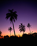 Silhouette of palm trees at sunset with planets in alighment.