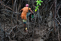 A Colombian girl climbs over the tree roots while searching for shellfish in the mangrove swamps on the Pacific coast, Colombia, 12 June 2010. Deep in the impenetrable labyrinth of mangrove swamps on the Pacific seashore, hundreds of people struggle everyday, searching and gathering a tiny shellfish called 'piangua'. Wading through sticky mud among the mangrove tree roots, facing the clouds of mosquitos, they pick up mussels hidden deep in mud, no matter of unbearable tropical heat or strong rain. Although the shellfish pickers, mostly Afro-Colombians displaced by the Colombian armed conflict, take a high risk (malaria, poisonous bites,...), their salary is very low and keeps them living in extreme poverty.