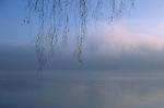 Tree limb close-up at sunrise along Lake Washington in fog Seattle Washington State USA