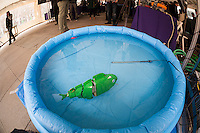 """Ph.D candidate Paul Phamduy's robotic fish, built in collaboration with other students, happy floats in a pool of water at NYU-Polytechnic School of Engineering's Research Expo in Brooklyn's """"Tech Triangle"""" in New York on Friday, April 24, 2015. Over forty research projects and their creators will exhibit and explain their research including cutting-edge robotics, engineering and biotechnology. (© Richard B. Levine)"""
