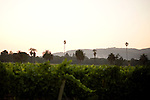 Vineyards along E. Napa Rd, in Sonoma, Ca., on Saturday, July 17, 2010.