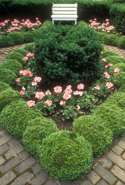 Small formal garden with boxwood Buxus, yew, pink geraniums, brick walkway and white garden bench