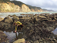 Tide pools, Cape Arago, South, Oregon Coast