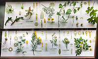 Display cases, The Ware Collection of Blaschka Glass Models of Plants Exhibit in Harvard Museum of Natural History