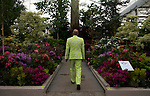 A man looks at the Hillier Crossing Continents display in the Great Pavilion at the RHS Chelsea Flower Show in London