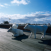 A trio of life-size fibreglass cows by Pascal Knapp roams a London roof terrace