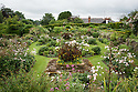 The Rose Garden at Upton Grey, in flower in mid July with Lilium regale. The Purbeck stone squares contain Canna indica.