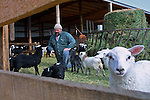 Tom Makowecki on his sheep farm, located on the outskirts of Edmonton, on March 16, 2001.  John Ulan/Epic Photography Inc.